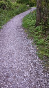Whatcom Co. Trails - Photo by Patti Rowlson