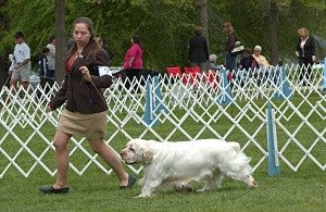 Professional-Dog-Trainer-and-Showing-300x195